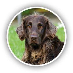 Médaillon souvenirs de mon chien